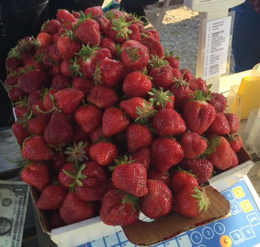Heaviest Box Of Strawberries ever Picked at Lakeview Farms